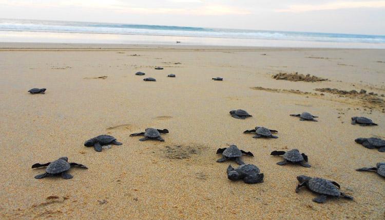 turtles fuerteventura